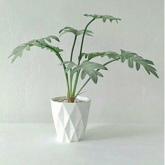 KDD ต้นไม้ประดิษฐ์ #A022 ซานาดู สีขาว1