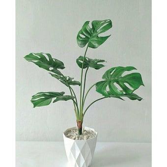KDD ต้นไม้ประดิษฐ์ #A023 มอลสเตอร่าสีขาว1